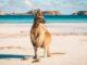Canguru em Lucky Bay no Parque Nacional Cape Range perto de Esperance, Austrália Ocidental
